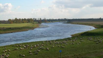 Elbe bei Mühlberg (Okt. 2010)