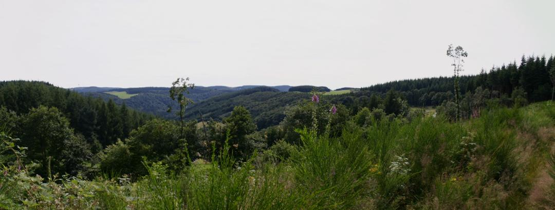 Hilgesberg (Mitte) 480 m NN