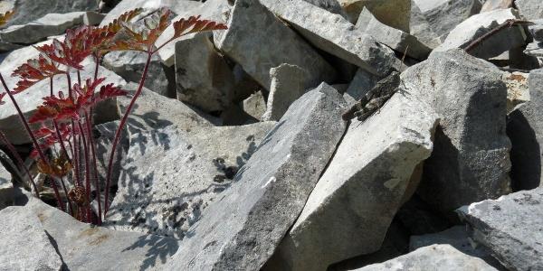Kalkplatten bei Kelheimwinzer