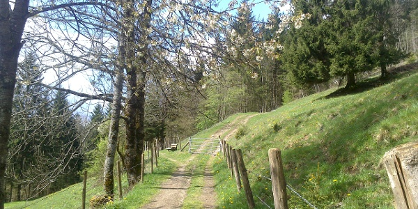 Der Höhenweg im Frühling