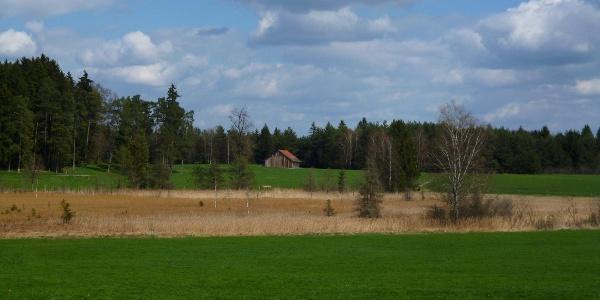 Blick über das idyllische Moorgebiet östlich des Pollinger Weihers.