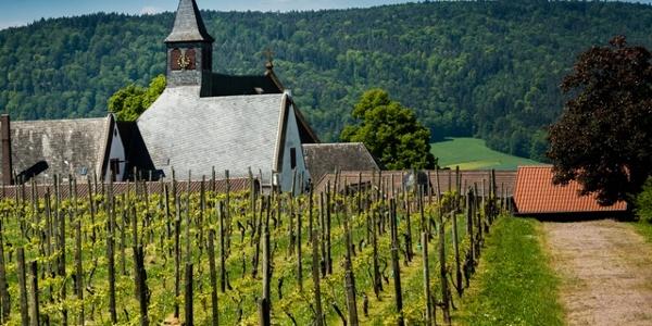 Weinberg vom Kloster Engelberg
