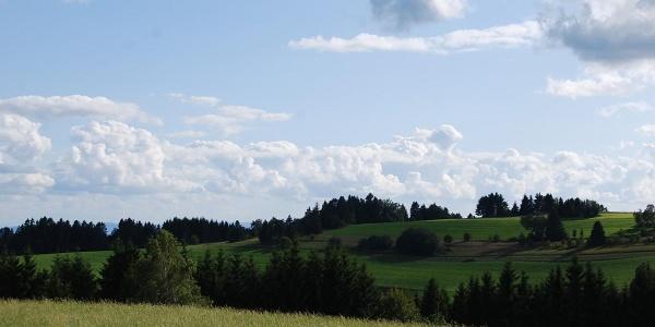 Sommerliche Dachsberg-Landschaft