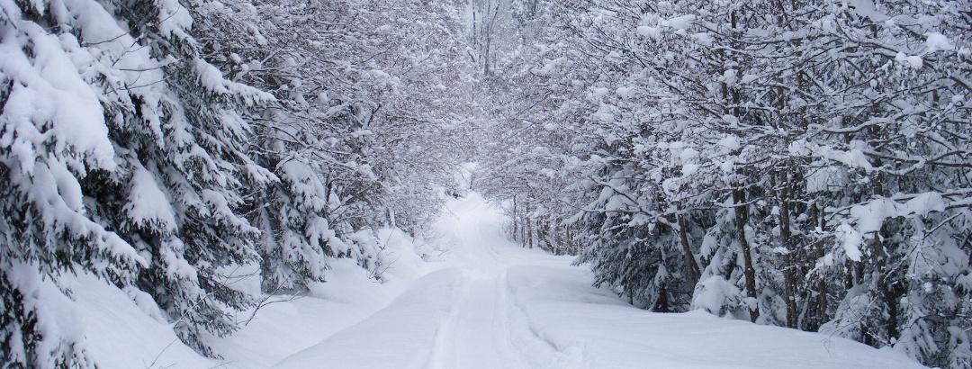 Wir wandern durch den verschneiten Winterwald.