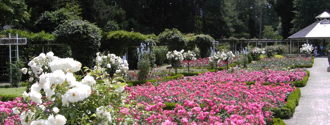 Rosengarten Rheda vor der Neugestaltung
