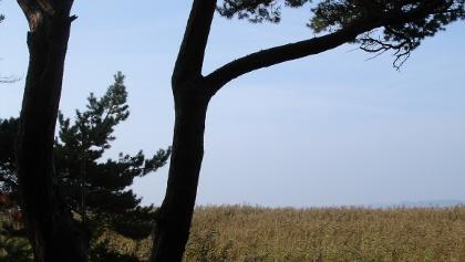 Auf Informationstafeln werden seltene Bäume entlang der Schaabe erklärt.