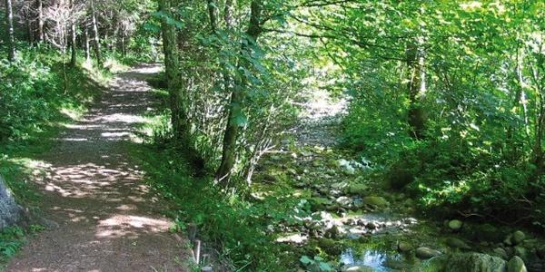 Wir laufen auf einem Waldweg entlang eines Baches.