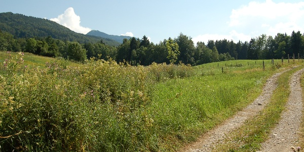 Feldweg nach Pfisterberg.