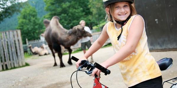 Auf zu den Kamelen
