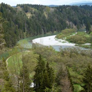 In der Litzauer Schleife ist der Lech noch wild und unverbaut.