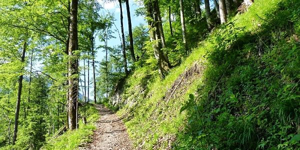 Ein schöner Waldweg