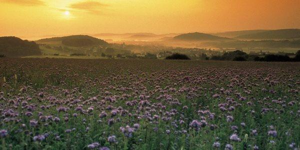Morgenstimmung im Sankt Wendeler Land