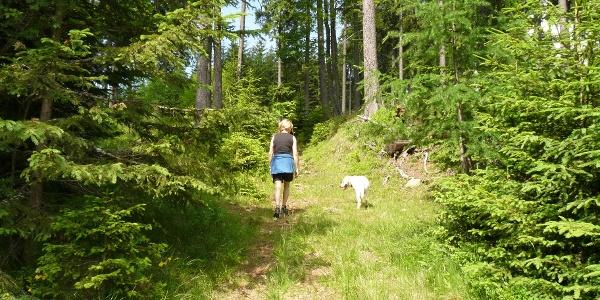 Genussvoll führt der weitere Anstieg durch den Hochwald zur Brendlhütte.