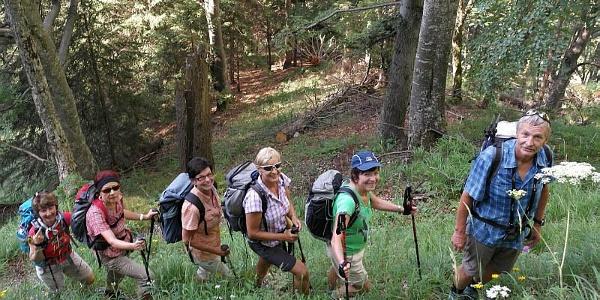 im Wald empor zum Ausgangsfelsen