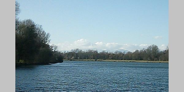 Ein Blick auf den Altrhein und die südlichen Vogesen.