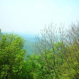 Aussicht durch die Bäume ins Tal.