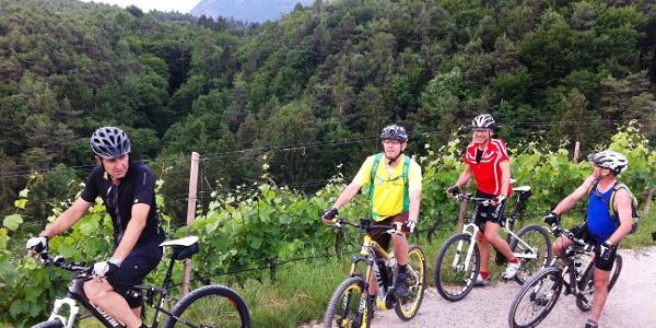 Weingärten Eppan Berg