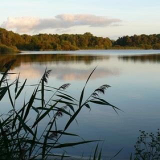 Die Ahlhorner Fischteiche - eine stimmungsvolle Landschaft.