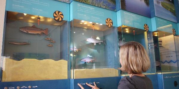 Interaktive Aquarienwand in der Ems-Erlebniswelt