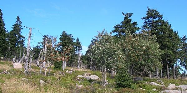 Landschaft am Brocken
