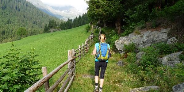 Am Waldrand (oberhalb der Häuser von Stein) folgen wir dem Steig taleinwärts.