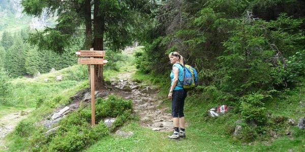 Kurz darauf zweigen wir nochmals rechterhand in Richtung Tribulaunhütte ab.