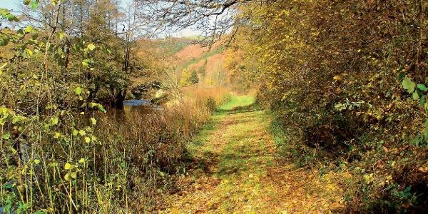 Auch im goldenen Herbst ist der Weg wunderschön.