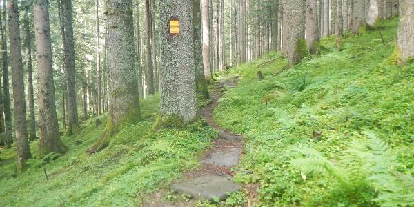 Waldpfad mit Wegkennzeichen