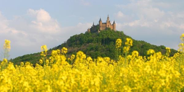 Burg Hohenzollern mit Rapsfeld