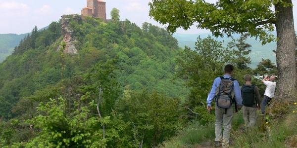 Die Burgen um Annweiler ziehen zahlreiche Besucher an.