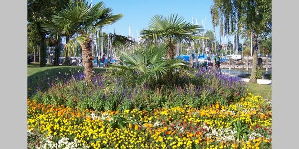 Das Klima der Bodensee-Region bringt reiche Blumenpracht hervor.