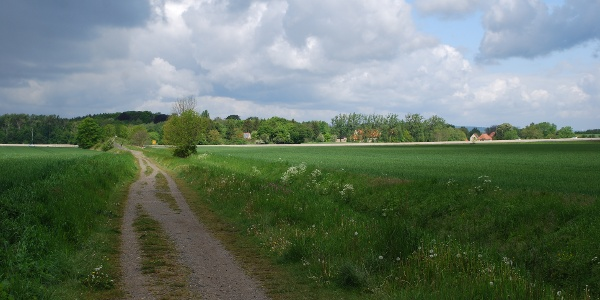 Blick über die Felder des nördlichen Harzvorlandes