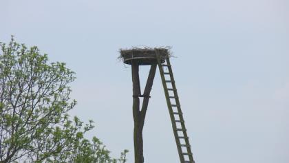 Wer genau hinschaut, entdeckt Störche in ihrem Nest hoch über den Queichwiesen.