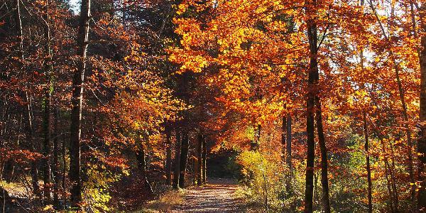 Der Herbst in seinen schönsten Farben.