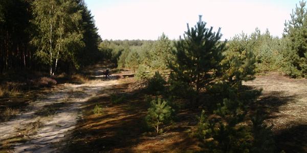 Der Wald Kraupa befindet sich im Naturpark Niederlausitzer Heidelandschaft.