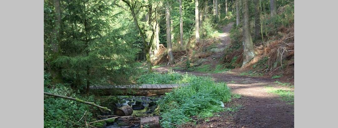Der Weg führt uns durch das romantische Silberbachtal.