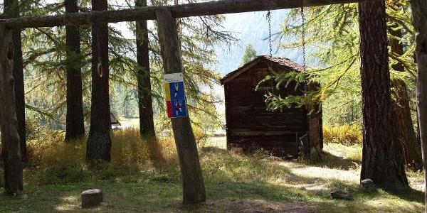 Parcours vita dans la forêt près de Randa