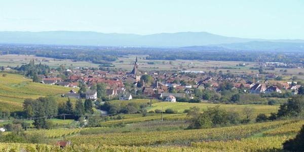 Bergheim, umgeben von Wein