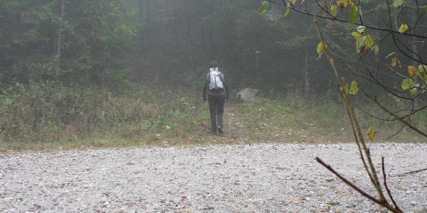... bis der Weg wieder in den Wald führt