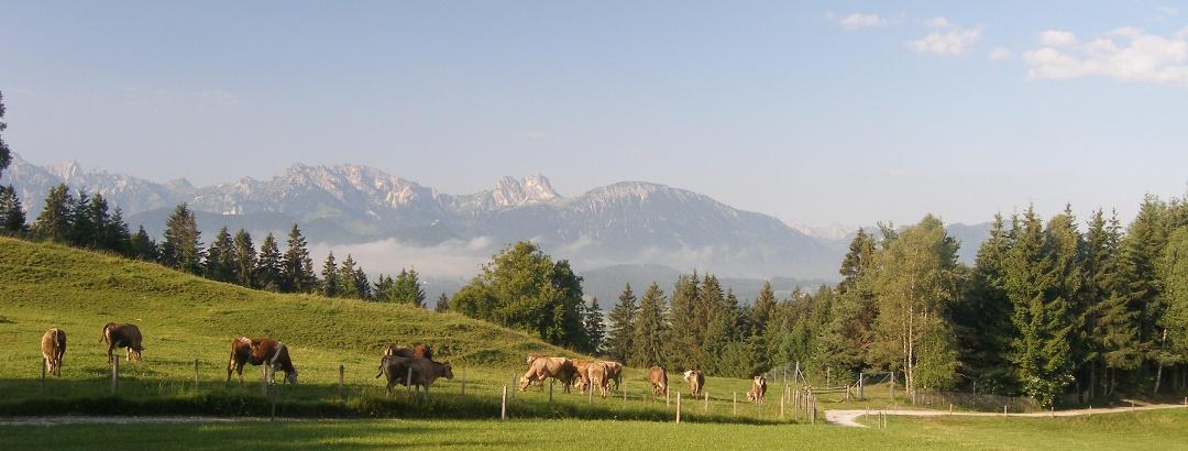 Auf den ersten Kilometern des Senkele-Rundwegs begleitet uns ein phantastischer Blick auf das Alpenpanorama.