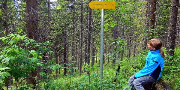 Am Weg zum Rennfeld