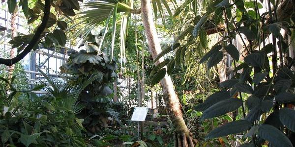 Botanischer Garten (Haus 13)
