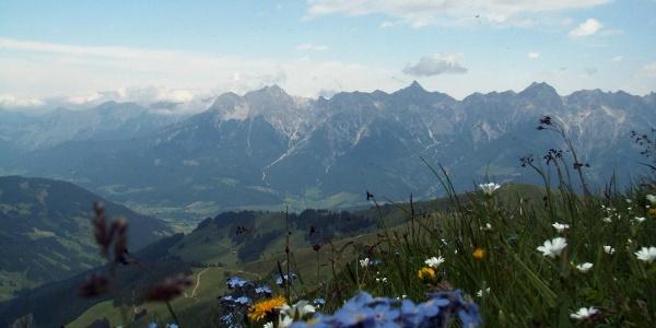 Blick Steinernes Meer mit Blumen