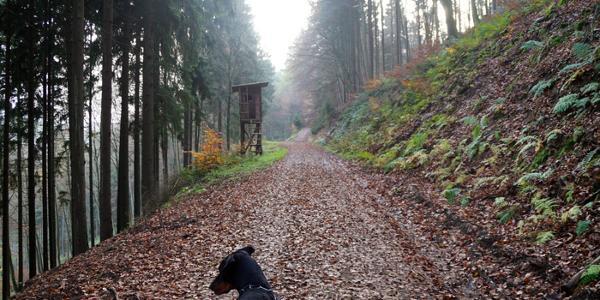 Unterwegs im Staatsforst Adenau