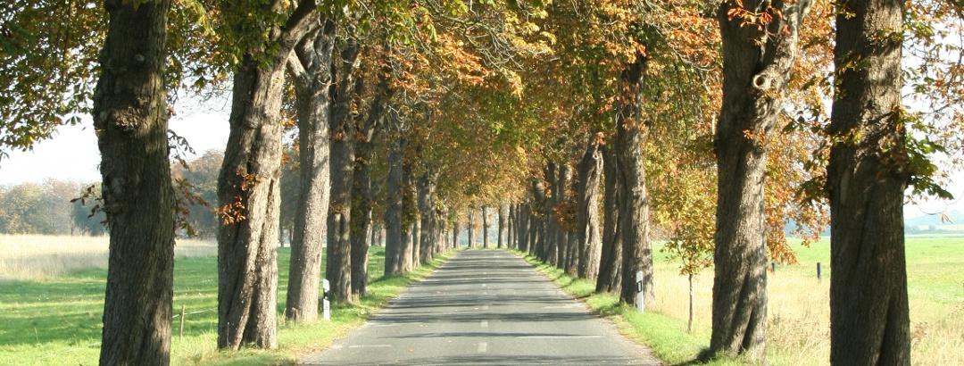 Von Liepe bis Rankwitz führt unsere Radtour durch eine herrliche Kastanienallee.