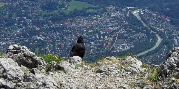 Am Gipfel eröffnet sich uns ein spektakulärer Ausblick auf Bad Reichenhall.