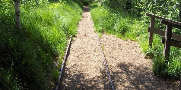 Schienen verlaufen im Moor.