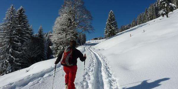 Aufstieg zur Oberen Balderschwanger Alpe