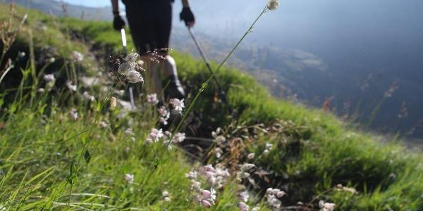 Türkenbundlilien am Wegesrand beim Aufstieg zum Türmljoch