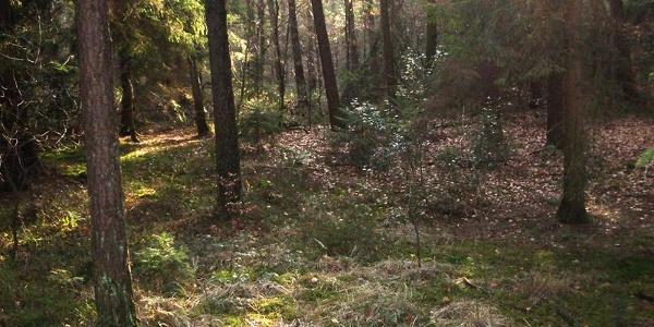 Holter Wald im Herbst